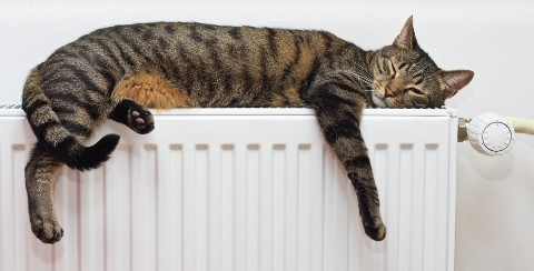 cat-on-radiator