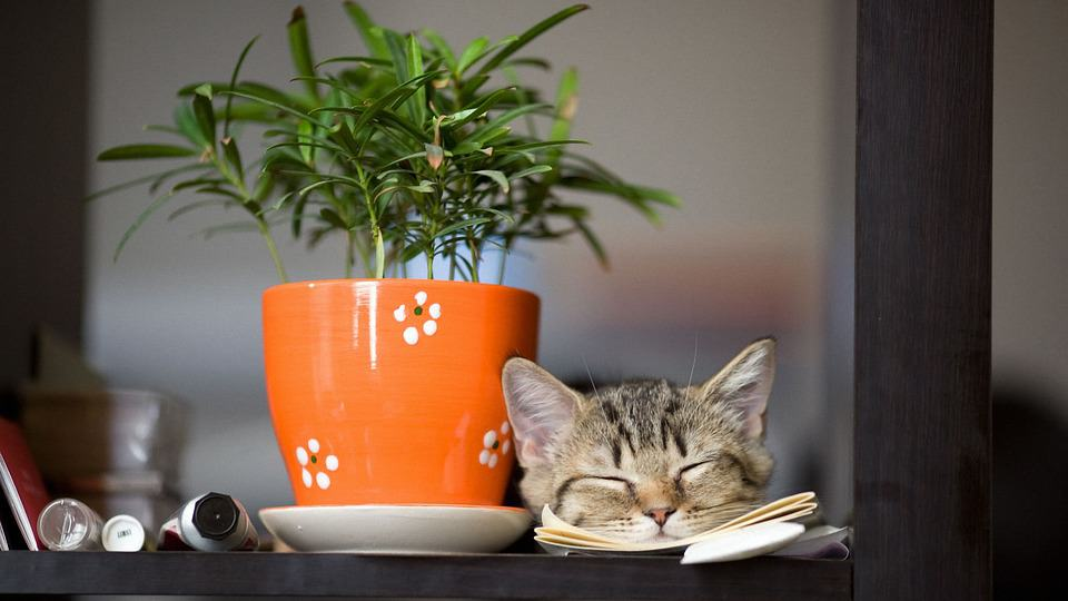 cat-and-plant