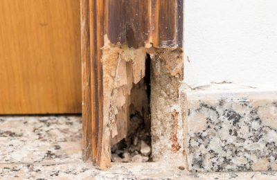 How To Prevent Dry Rot In Your Home?